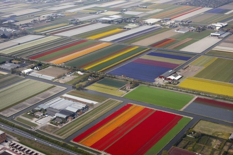 campo holandés 1
